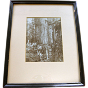 1870's California redwood loggers, Pacific Northwest, Seattle