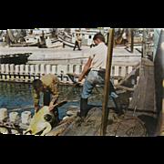 RPPC, 1950's, sea turtle harvesting, Key West Florida.