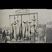 RPPC 1915, giant tuna fishing, Bailey Island Maine