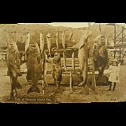 RPPC, ca.1910, fishing, Catalina Island, California