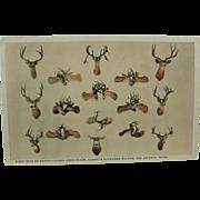 RPPC, taxidermy 1916, colorized, deer heads taxidermy, Texas.