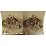 SOLD -SCARCE- 1890 antique unmounted stereoview image - Taxidermy