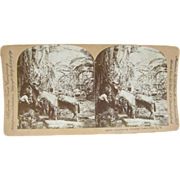 1902 Antique stereoview by Lingley, BANANAS & burrows in Costa Rica