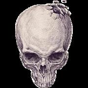 Skull's Crack