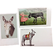 3 Donkey Postcards, 2 Real Photo Cards