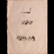 SALE 1802 Original Copper Engraving Cobra & Anthropological Stuidies from Napoleons Travels to