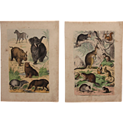 1840's Set of 2 Animal Engravings of Mammals / Print of Fauna