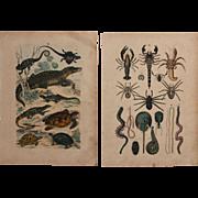 1840's Set of 2 Animal Engravings of Reptiles, Spiders, Scorpions & more  / Print of Fauna