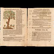 16th Century original handcolored Woodcut of Serpent / Snake & Skull under Apple Tree  ...