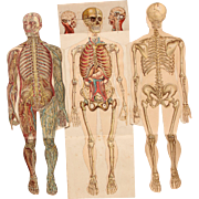 SALE 1900's Foldout Model of Human body - Medical Anatomy Chart from Bilz Natural Healing