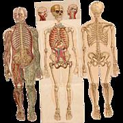 SALE 1900's Foldout Model of Human body - Medical Anatomy Chart from Bilz Natural Healing