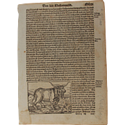 16th Century Woodcut of Animals (Bees / Bear / Bull) - Book page of Cosmographia (Sebastian ..