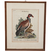 SALE Rare 18th Century Copper Engraving of The King Vulture ( Sarcoramphus papa ) - George ...