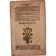 1570s original handcolored floral woodcut of yellowdick (Peter Andr. Matthiolis)