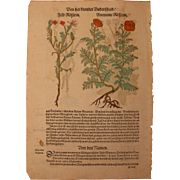 16th Century original handcolored floral woodcut / print of flowers (Hieronymus Bock / ...
