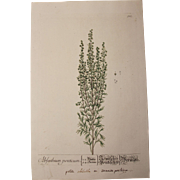SALE 18th Century Floral Copper Engraving of Absinthium out of the Herbarium of ELIZABETH ...