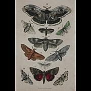 SALE 1840's Original Antique Lithograph of Butterflies / Moths