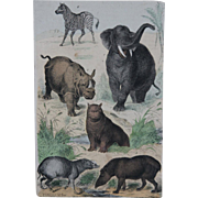 1840's Original Antique Lithograph of Mammals like Rhinoceros, Elephant, Zebra & Hippo