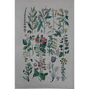 SALE 1840's Original Antique Lithograph - Botanical Chart of flowers and fruit