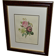 "Framed Book Plate- Redouté's ""Rose"""