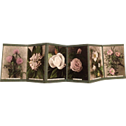 SALE PORTFOLIO OF 6 HAND COLORED PHOTOGRAPHS BY C. W. JOHNSON - CIRCA 1915