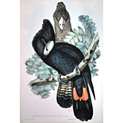 """J. Gould & H.C. Richter hand colored lithograph, """"Great-billed Black Cockatoo"""" Birds"""