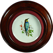 Vintage Framed Hand Painted Meissen Style Porcelain Plate – Bird on a Tree Branch †...