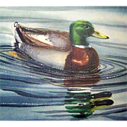 SALE Original Framed Mallard Duck Water Color by Wildlife Artist Larry Simons