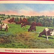 SOLD 1949 Linen Postcard of Cows Grazing in Baldwin, Wisconsin  NYCE