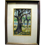 SALE Vintage Southern Watercolor Study of a Live Oak by Mary May