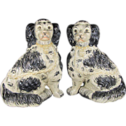 SALE Pair Staffordshire King Charles Spaniels Dogs