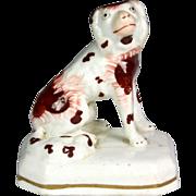 Superb 19th Century Miniature Staffordshire Pottery Spaniel
