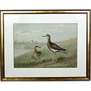 Late 19th Century Hand Colored Lithograph of Shorebirds by Alexander Pope Jr.