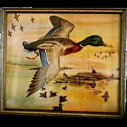 1940's Mallard Duck Print