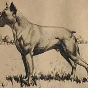 SOLD Dog art American listed artist Richard Evett Bishop ( 1887-1975) etching of a boxer dog