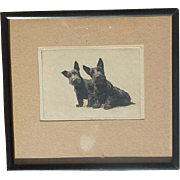 Morgan Dennis (1892 - 1960) American artist original etching print signed of Scottish Terrier