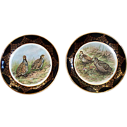 Pair of Staffordshire Regency Bone China  Bird Plates