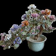 SALE PENDING Chinese Flowering Jade Tree in Celadon Pot