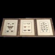 Original Color Engravings 18th Century Butterflies Framed