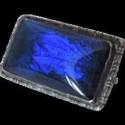 Antique Blue Butterfly Wing Silver Brooch
