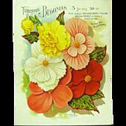 Victorian Garden Catalog Lithograph, Stecher Litho. Co.