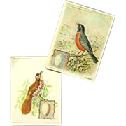 Vintage Singer Sewing Machine Trade Cards Show Robin, Brown Thrasher