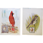 """American Singer Series"" Vintage Trade Cards show Bird Drawings by J.L. Ridgway"