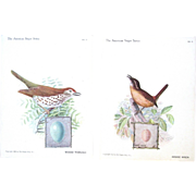 Singer Sewing Machine Advertising Cards with Birds, Wren and Wood Thrush