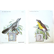 "Song Birds on Vintage ""American Singer Series"" Trade Cards"