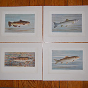 SALE 4 WB Gillette Fish Art Prints Trout Salmon Bullhead Chub