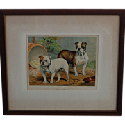 "SALE Cassell's Book of the Dog, Bulldog Print ""Smasher"" and ""Doon Brae"""