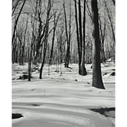 SALE Original 'Winter in the Woods' B/W Art Photograph 8x10