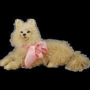 French Pajama Dog