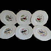 Royal Cauldon Bristol Ironstone Made in England Avery Plates, set of 6